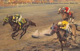 spof021542 - Miami, FL USA Horse Racing Old Vintage Antique Postcard