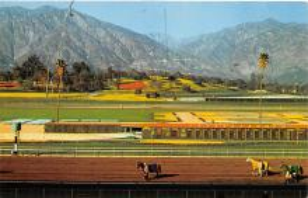 spof021577 - Horse Racing Old Vintage Antique Postcard