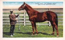 spof021605 - Man-O-War Bred in Old Kentucky Horse Racing Old Vintage Antique Postcard