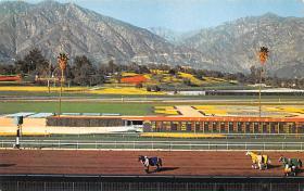 spof021609 - Santa Anita Park Arcadia, CA USA Horse Racing Old Vintage Antique Postcard