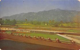 spof021625 - Santa Anita Park Arcadia, CA USA Horse Racing Old Vintage Antique Postcard