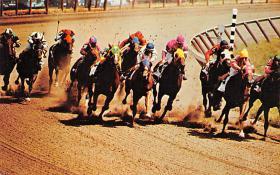spof021667 - Saratoga, NY, USA Horse Racing Postcard