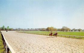 spof021669 - Aiken, SC, USA Aiken Training Track Horse Racing Postcard