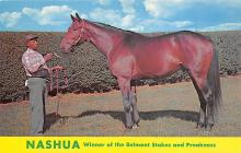 spof021673 - Lexington, KY, USA Nashua, Winner of Belmont Stakes, Preakness Horse Racing Postcard