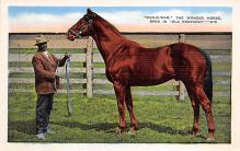 spof021681 - Kentucky, USA Man O War Horse Racing Postcard