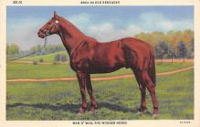 spof021682 - Kentucky, USA Man O War Horse Racing Postcard