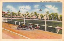 spof021683 - Florida, USA Greyhound Racing Horse Racing Postcard