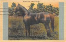 spof021685 - Kentucky, USA Man O War Horse Racing Postcard