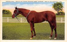 spof021693 - Lexington, KY, USA Burgoo King, Kentucky Derby Winner Horse Racing Postcard