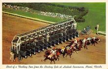 spof021697 - Miami, FL, USA Hialeah Race Course Horse Racing Postcard