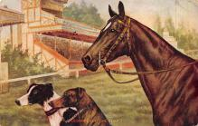 spof021706 - Horse Racing Postcard
