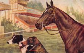 spof021707 - Horse Racing Postcard