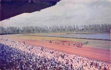 spof021708 - Miami, FL, USA Hialeah Race Course Horse Racing Postcard