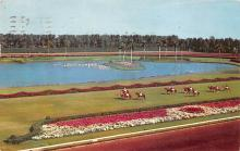 spof021723 - Hialeah, FL, USA Hialeah Race Course Horse Racing Postcard