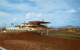 spof021728 - Phoenix, AZ, USA Turf Paradise Horse Racing Postcard