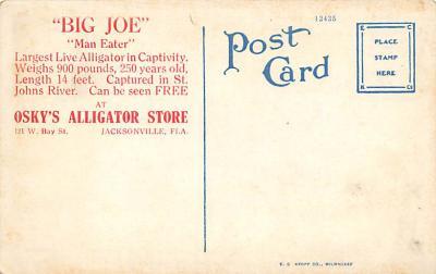 top006529 - Alligator Post Card  back