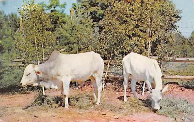 top008585 - Cows