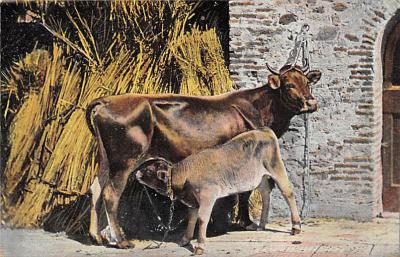 top008597 - Cows