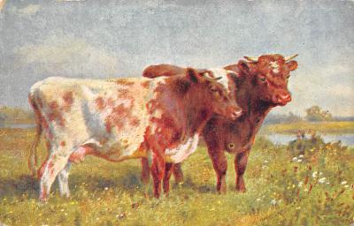 top008617 - Cows