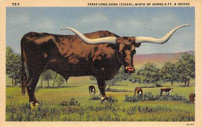top008659 - Longhorn Steer Bull