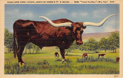 top008661 - Longhorn Steer Bull