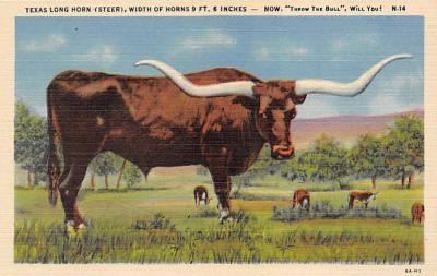 top008667 - Longhorn Steer Bull