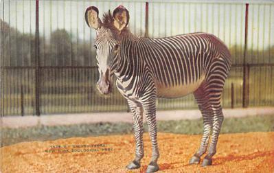 top008719 - Zebra