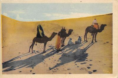 top008747 - Camel