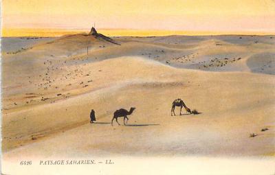 top008785 - Camel