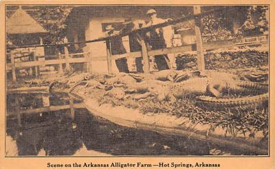 top008931 - Alligators