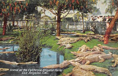 top008943 - Alligators