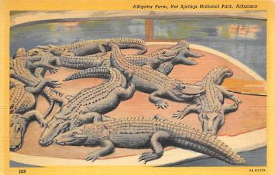 top008945 - Alligators