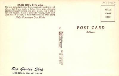 top009257 - Owl  back
