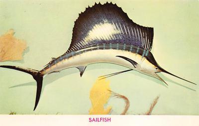 top009377 - Fish/Sea Mammals