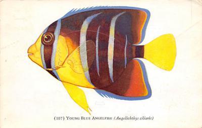 top009425 - Fish/Sea Mammals