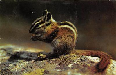 top009519 - Squirrel/Chipmunks/Woodchucks