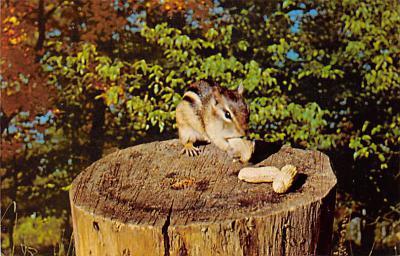 top009543 - Squirrel/Chipmunks/Woodchucks