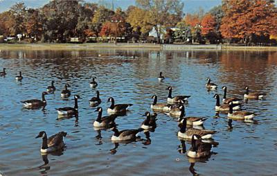 top009617 - Ducks/Geese