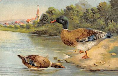 top009657 - Ducks/Geese