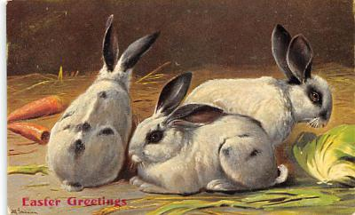 top009713 - Rabbits