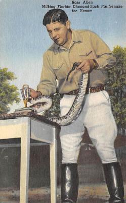 top009739 - Snakes/Reptiles