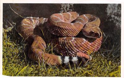 top009755 - Snakes/Reptiles