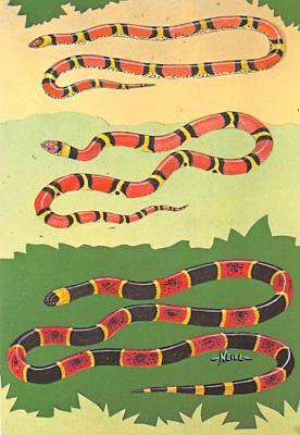 top009757 - Snakes/Reptiles