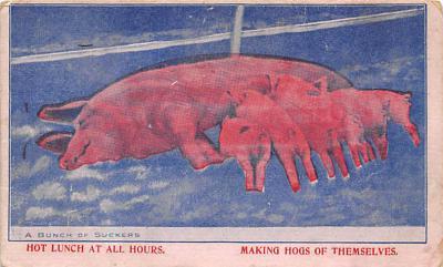 top009929 - Pigs