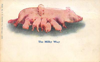 top009977 - Pigs