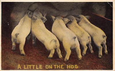 top009991 - Pigs