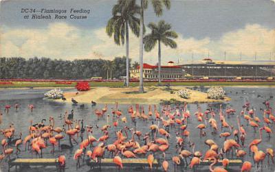 top010035 - Flamingos
