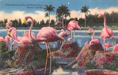 top010041 - Flamingos