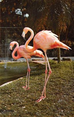 top010057 - Flamingos
