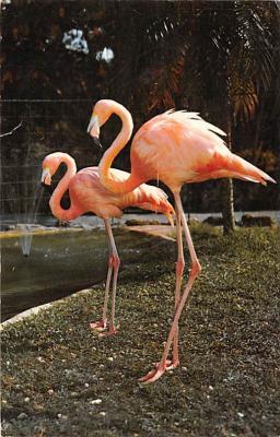 top010075 - Flamingos